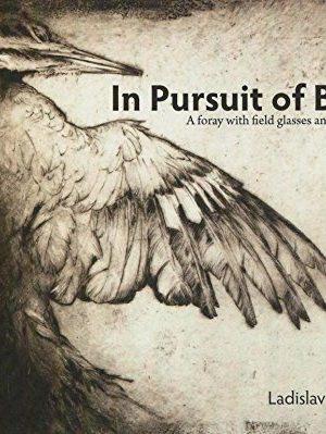 In Pursuit of Birds